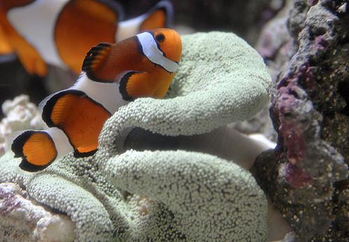 thumbnail image for blog Admire Aquatic Plants and More at Kenilworth Aquatic Gardens