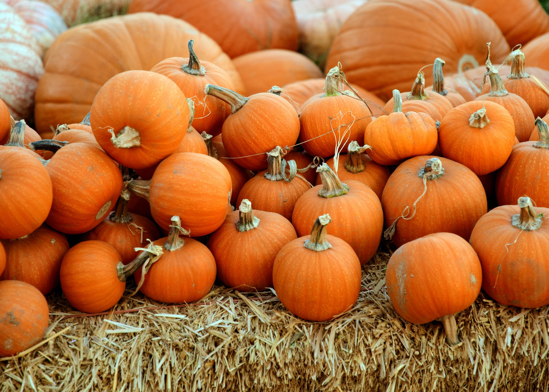 thumbnail image for blog The Best Ways to Decorate a Pumpkin, No Carving Knife Necessary