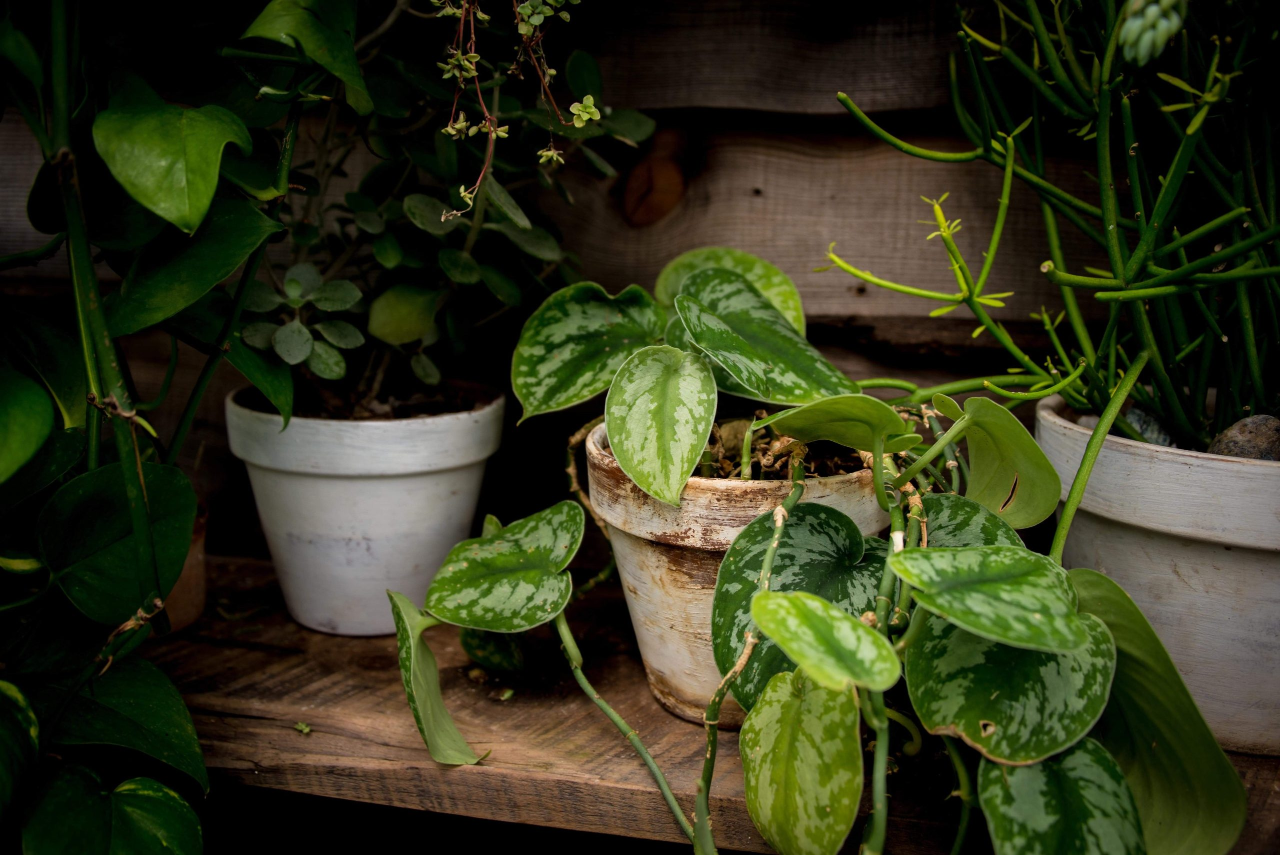 thumbnail image for blog The Best Houseplants for Smaller Spaces