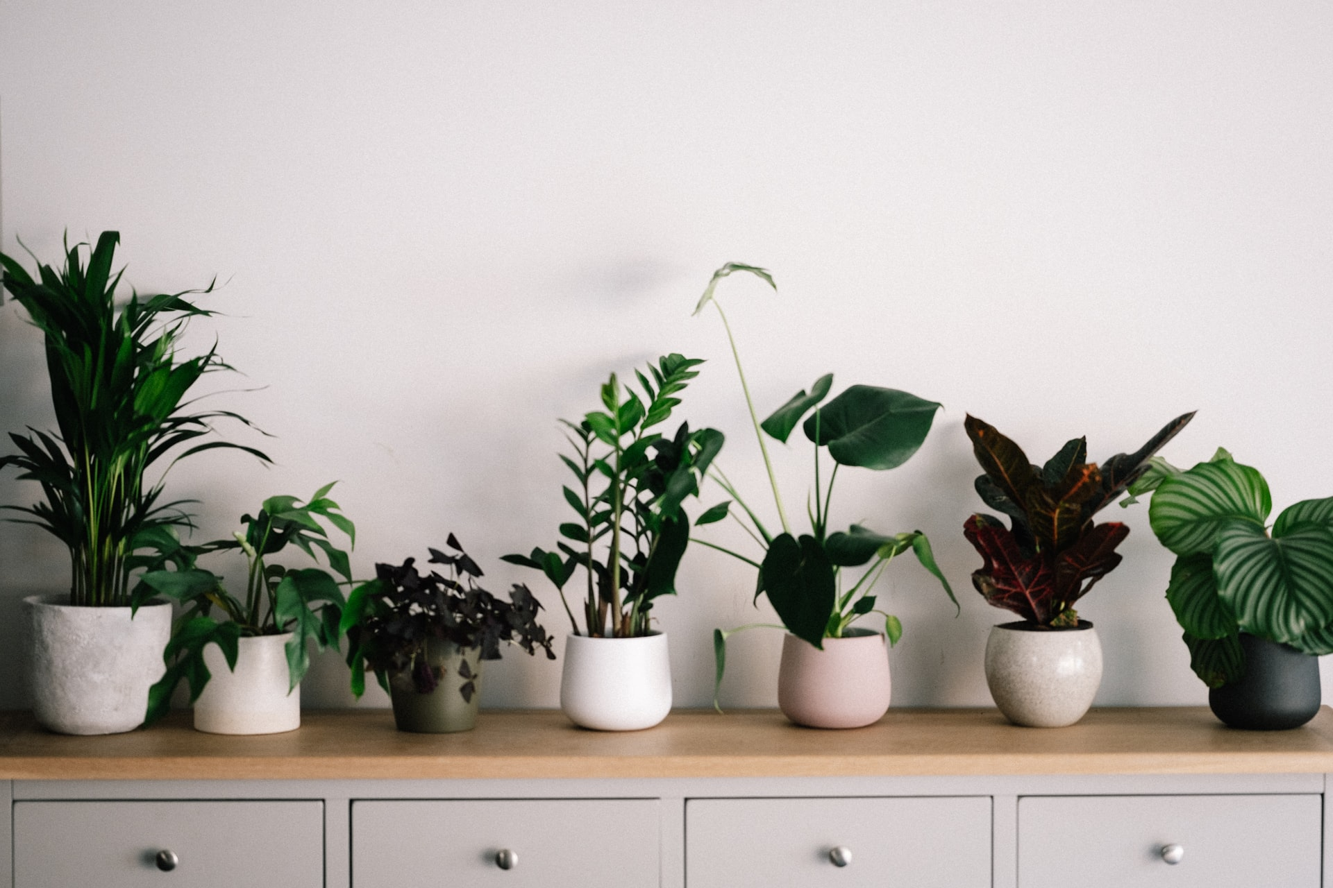 thumbnail image for blog Find Beautiful Plants for Your Apartment at Little Leaf