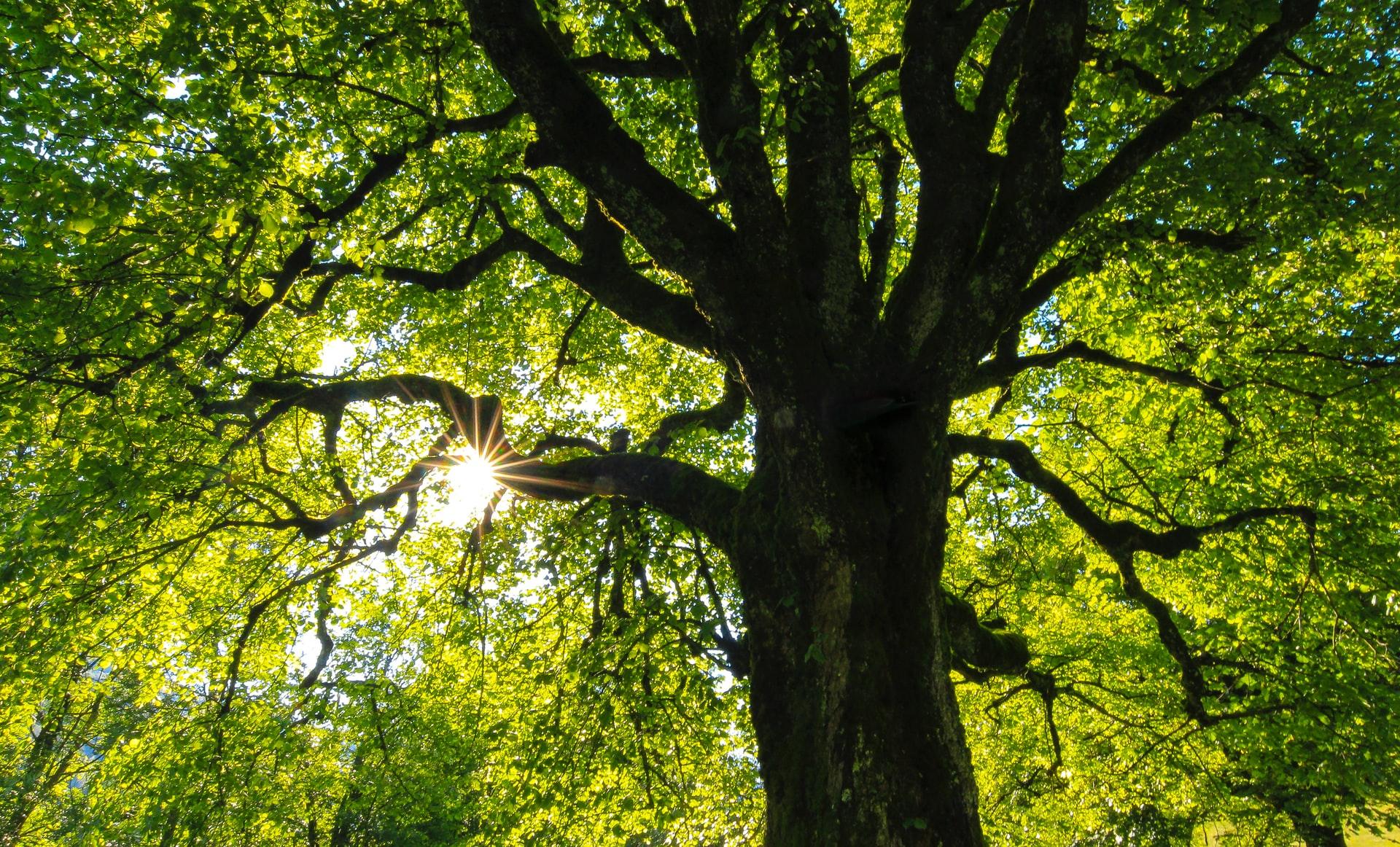 thumbnail image for blog Unpack a Picnic at Rock Creek Park